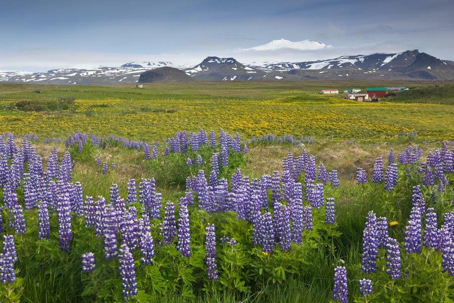 Viaje al centro de la tierra. Islandia (david Pérez Hens)