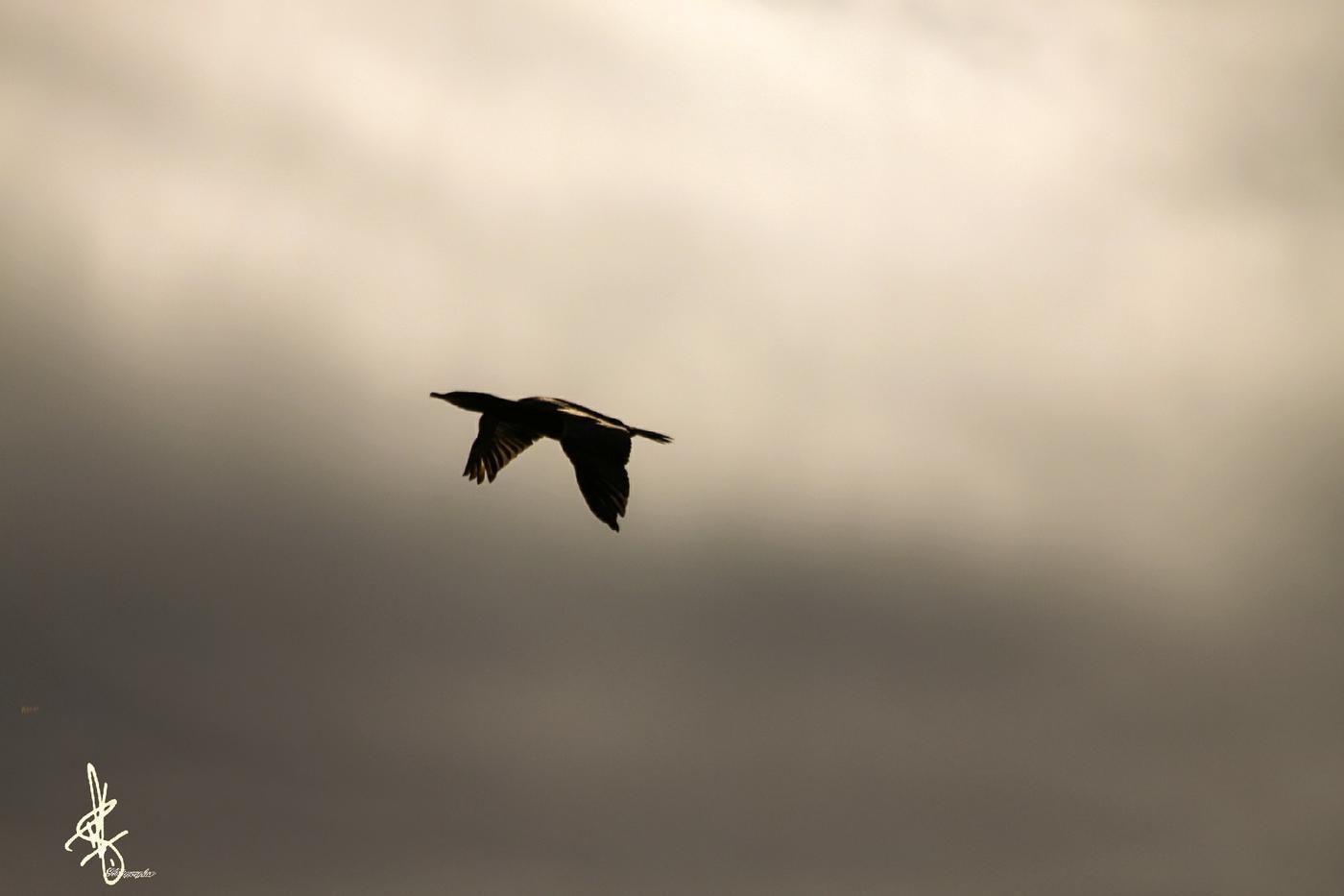 Volando libre (Antonio Rodriguez)