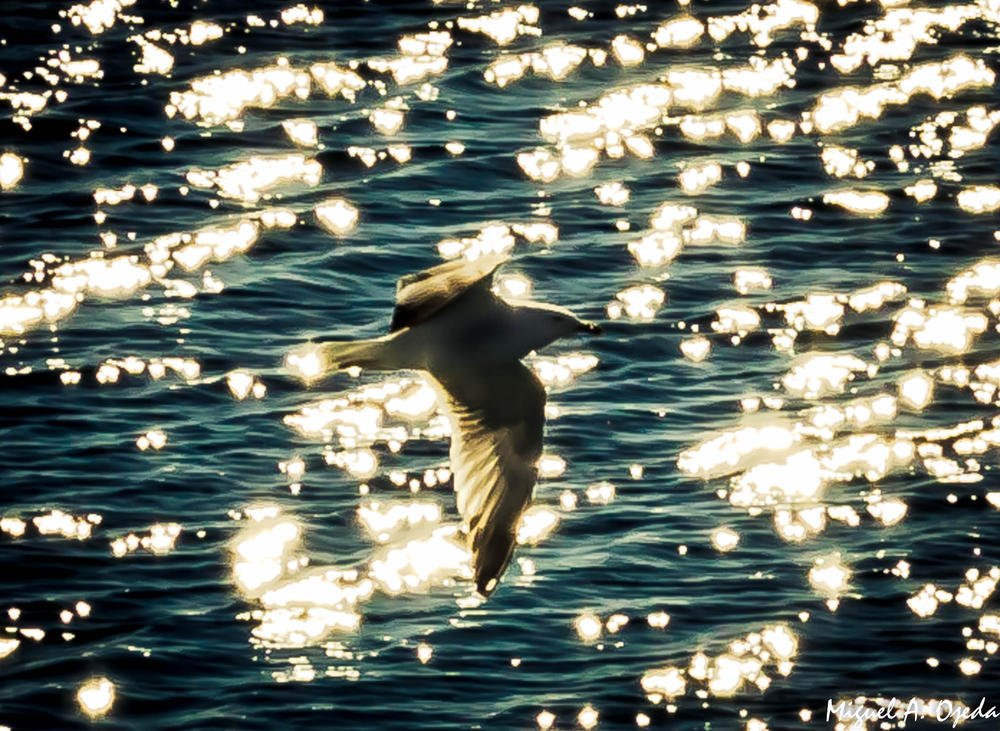 Volando sobre perlas (Miguel Ojeda Usillos)